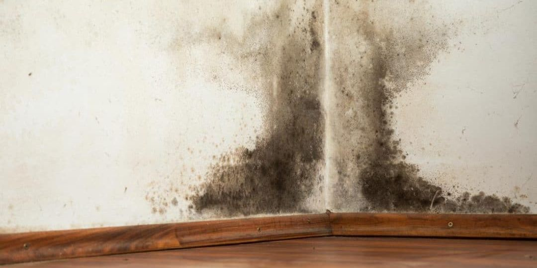 Common Household Mold Tips