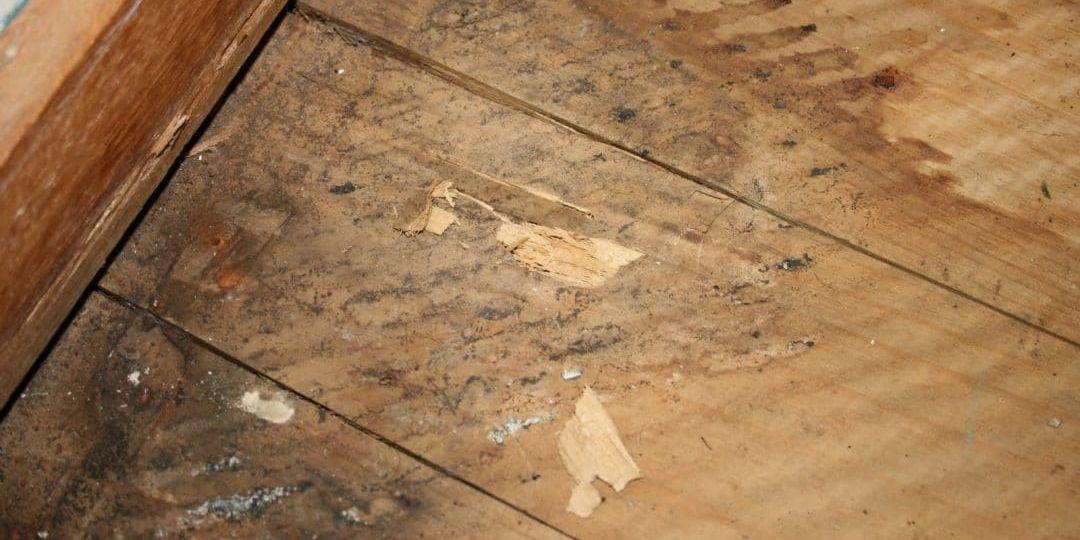Replacing Water Damaged Flooring